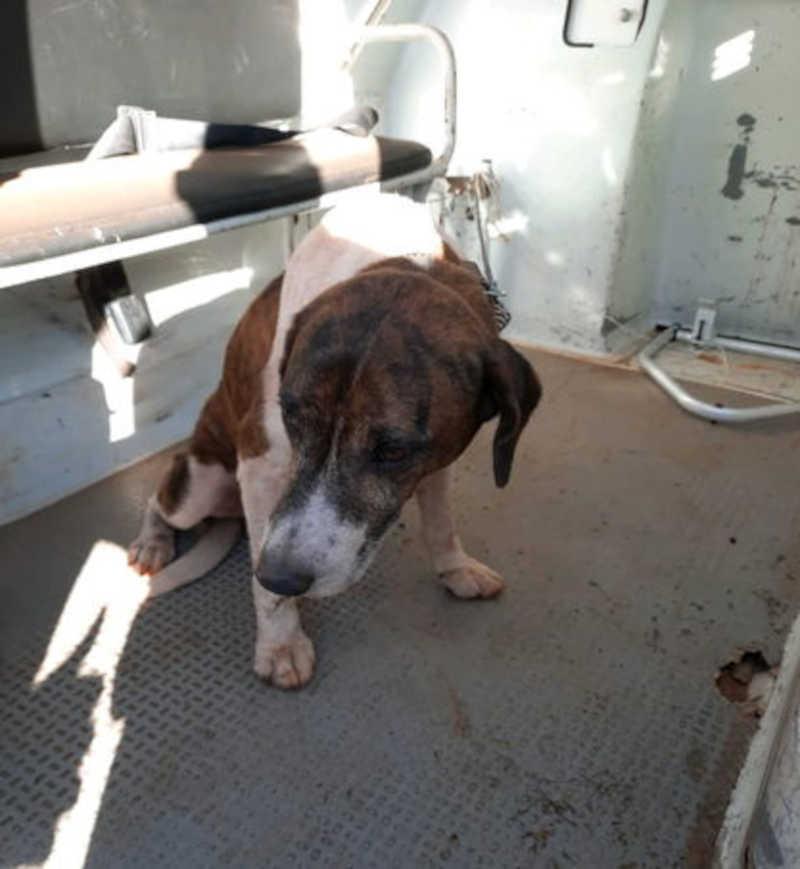 Morador expulsa cachorro de casa e o agride com pauladas em Mandaguari, PR
