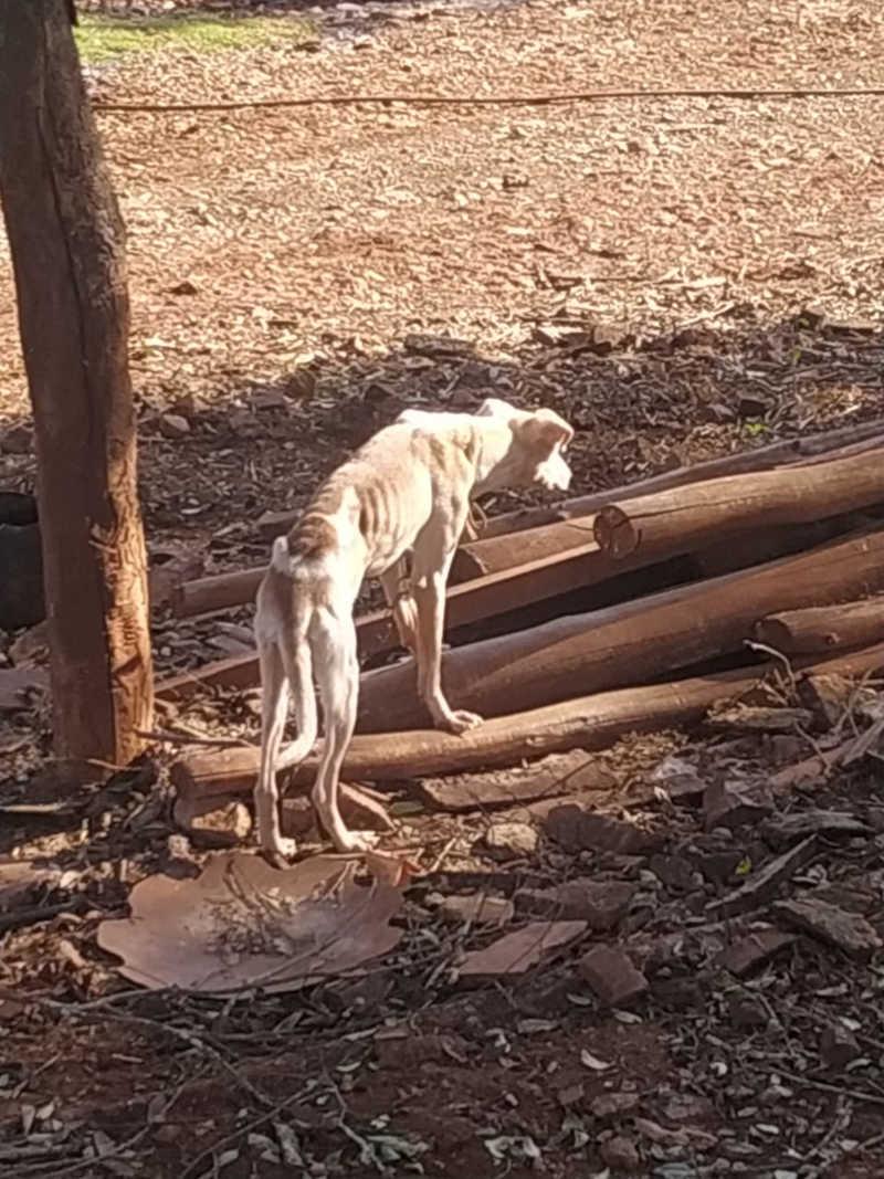 Homem é multado e vai responder por maus-tratos a animais em Marmeleiro, PR
