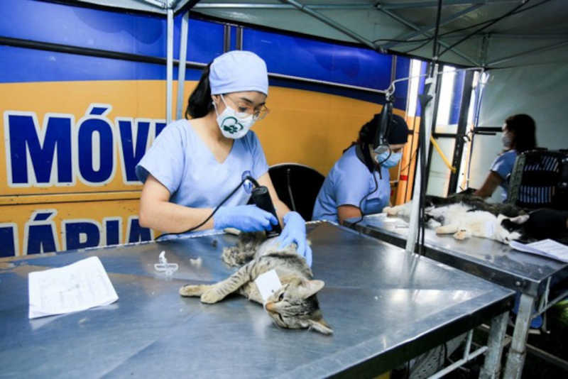 Umuarama (PR) terá cirurgia de castração gratuita para mais de 450 cães e gatos
