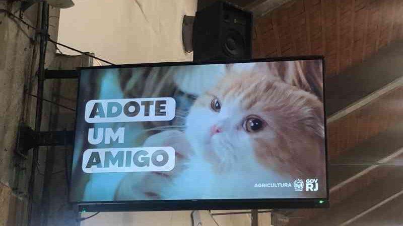 Vídeo de incentivo a adoção de animais é exibido na rodoviária de Niterói, RJ