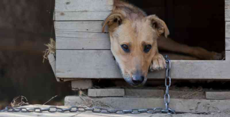 Acorrentar animais pode se tornar proibido no Rio de Janeiro
