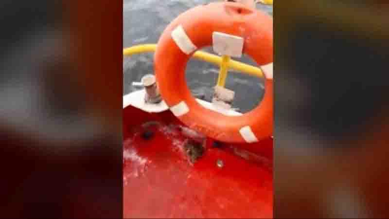 Baleia quase vira barco na Baía de Guanabara, e biólogo diz que presença do animal 'mostra que o ecossistema ainda está vivo'
