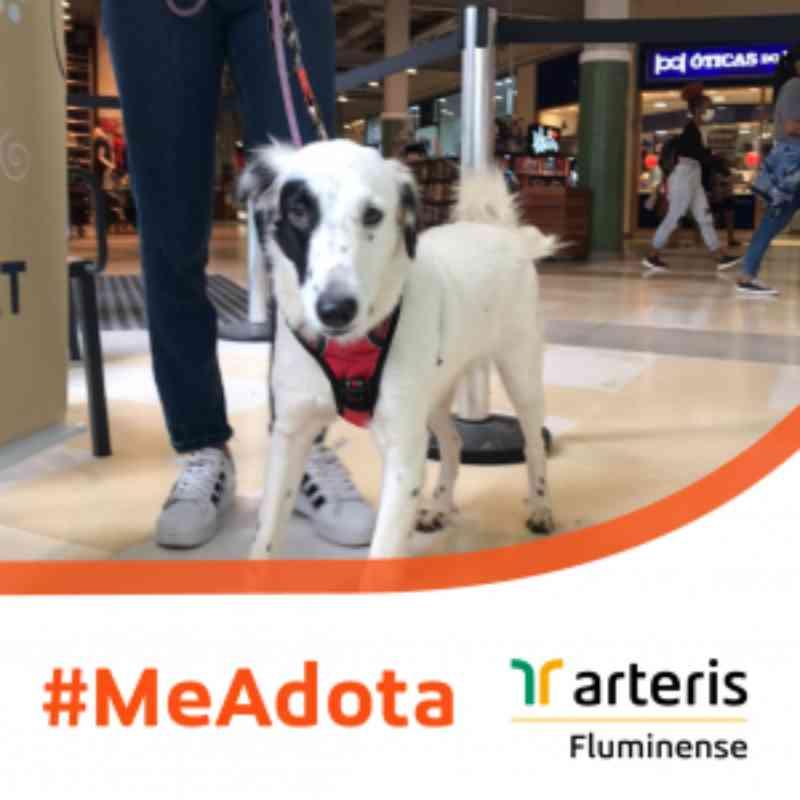 Cães resgatados pela concessionária Arteris Fluminense estão disponíveis para adoção