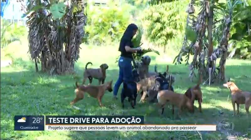 ONG que abriga cães abandonados cria 'test drive' de adoção dos animais