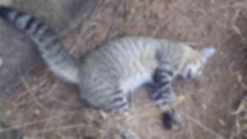 Mais de 15 gatos são encontrados mortos por possível envenenamento em Cacoal, RO