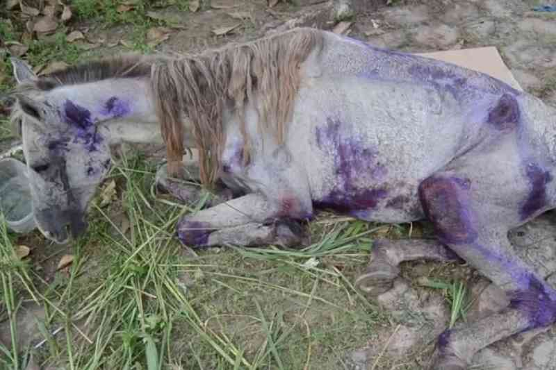 Homem é preso por maltratar cavalo em RO; animal estava tão debilitado que veterinário recomendou sacrificá-lo