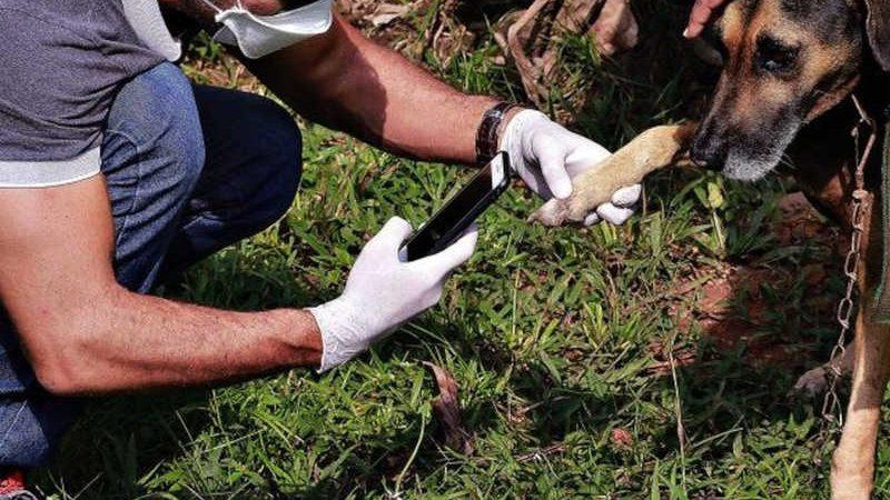 """Operação """"Salve Patinhas ll"""" apura denúncias de animais em situação de maus-tratos em Porto Velho — Foto: Governo de Rondônia/Reprodução"""
