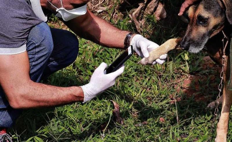 Mais de 300 denúncias de maus-tratos a animais são analisadas em operação; veja como denunciar em Porto Velho, RO