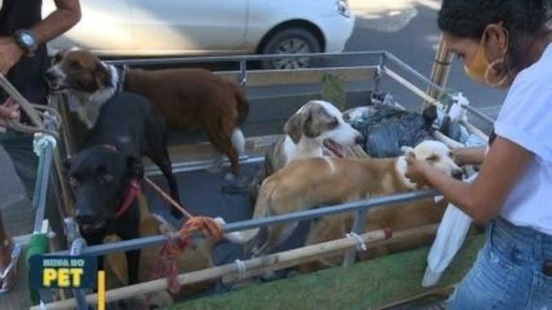 Apaixonado por animais, venezuelano morador de rua adota oito cachorros em Boa Vista, RR