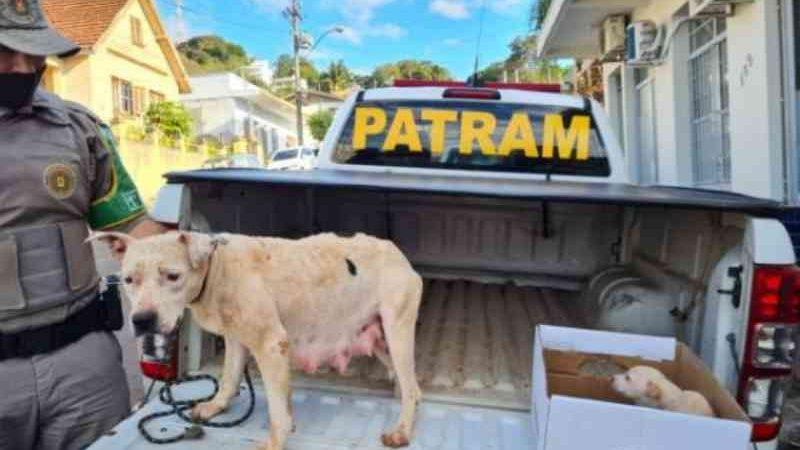 Homem é preso em flagrante por maus-tratos a animais em Cruzeiro do Sul, RS