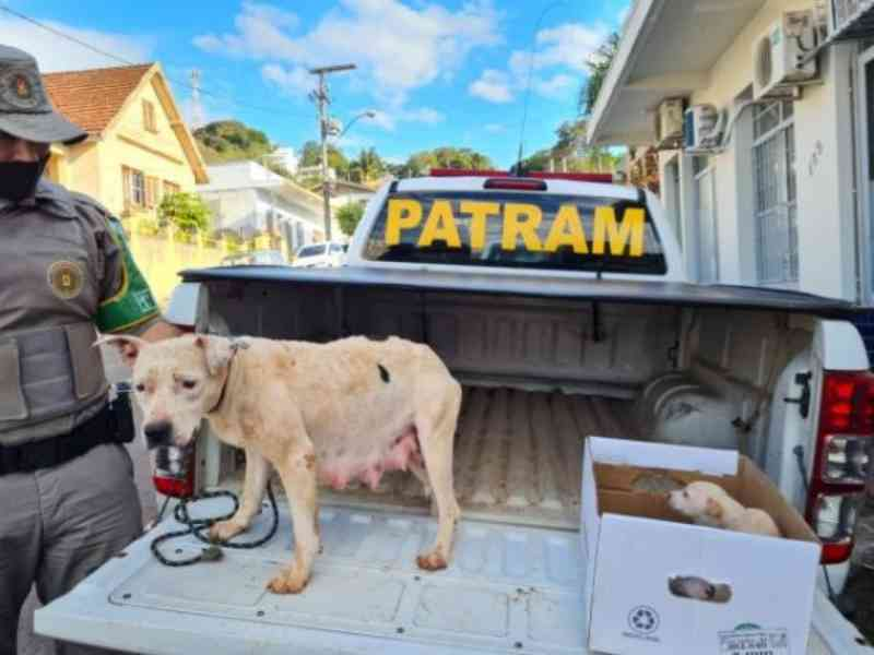 Homem é preso em flagrante por maus-tratos contra cadela e seus filhotes em Cruzeiro do Sul, RS