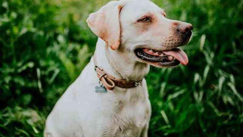 Porto Alegre (RS) abre cadastro para solicitar castração de cães e gatos