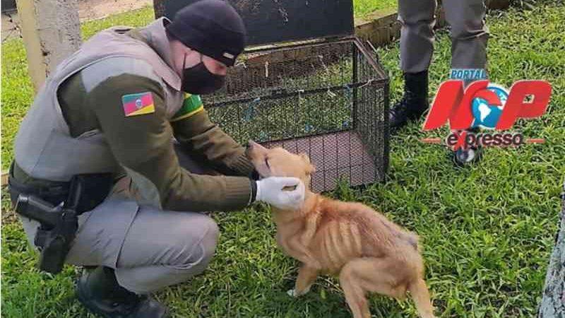 Polícia encontra cão desnutrido e homem é preso em Santiago (RS) por maus-tratos