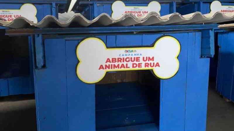 Projeto Abrigue Um Animal de Rua (Foto: Divulgação)