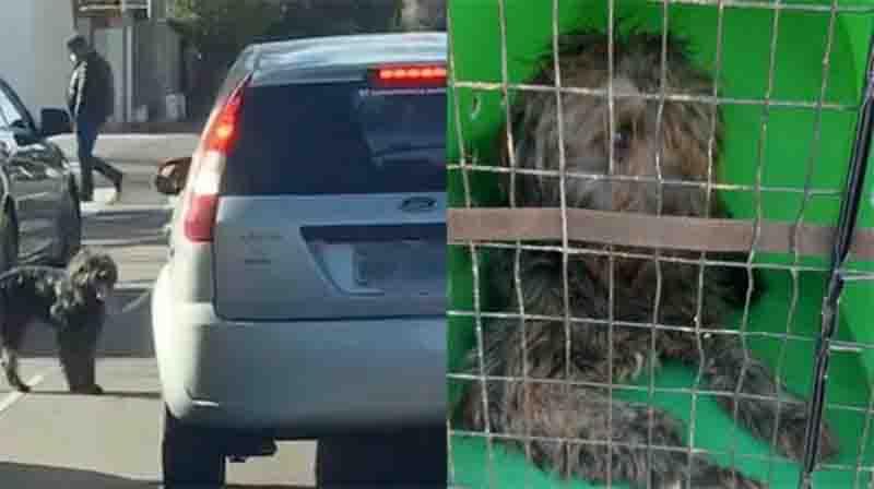 Mulher é flagrada abandonando cachorro na BR-470, em Bento Gonçalves, RS