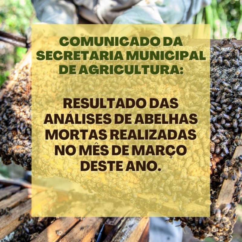 Divulgado o resultado de análises de abelhas mortas em São Pedro do Butiá (RS) realizadas em março deste ano