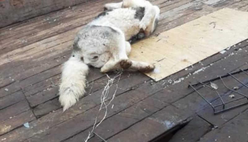 Homem mata cachorra a pauladas em Erechim, RS