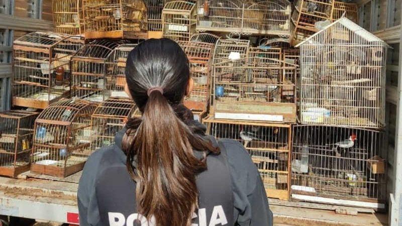 Aves apreendidas em Porto Alegre foram encaminhadas para centro de triagem do Ibama — Foto: Polícia Civil/Divulgação
