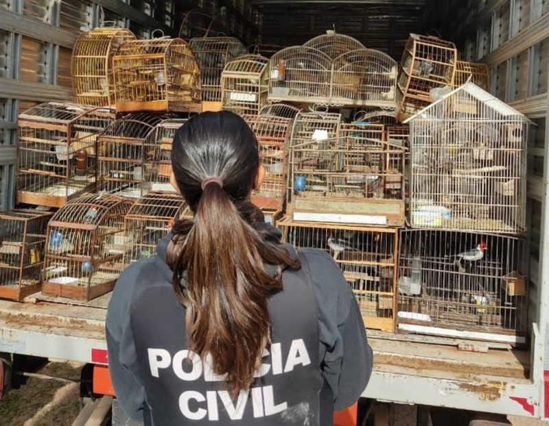Polícia apreende mais de 200 aves silvestres dentro de residência em Porto Alegre, RS
