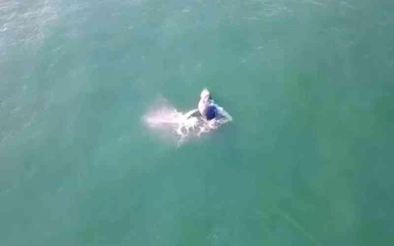 Redes de pesca irregulares são apreendidas no caminho de baleias em Balneário Camboriú, SC