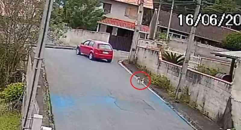 Câmera flagra cachorro correndo atrás de motorista após ser abandonado em Blumenau, SC