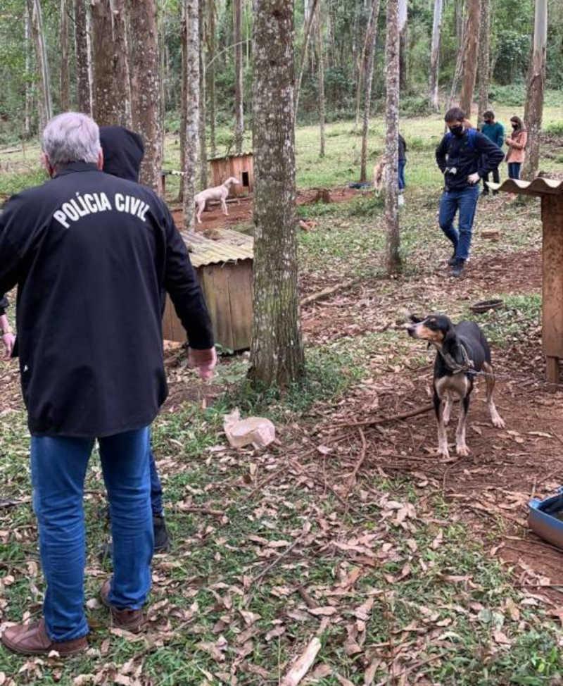 Polícia Civil apura crime de maus-tratos contra cães em sítio de Nova Veneza, SC