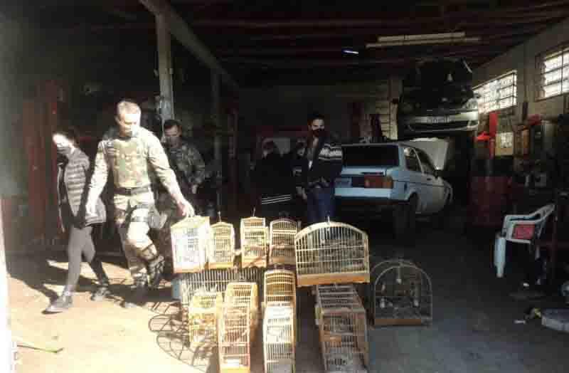 Cerca de 25 aves foram apreendidas pela Polícia Militar Ambiental e fiscais da Famcri. Foto: Divulgação/Decom/ND