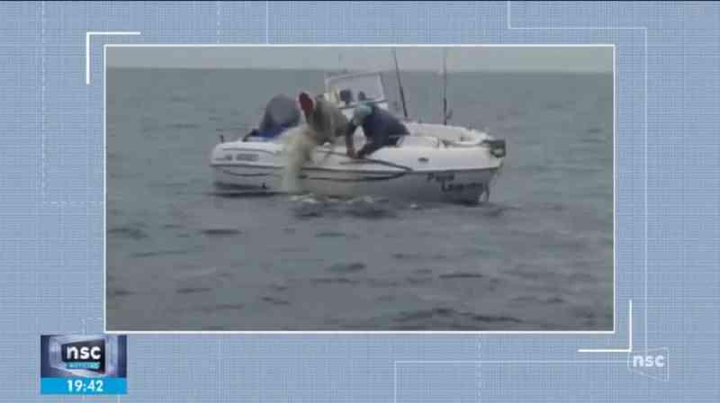Filhote de baleia é resgatado após ficar preso em rede de pesca no litoral norte de SC; VÍDEO