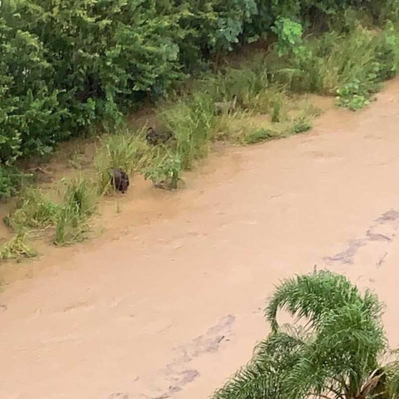 Cavalos são salvos antes de se afogarem em córrego de Florianópolis, SC; veja o vídeo