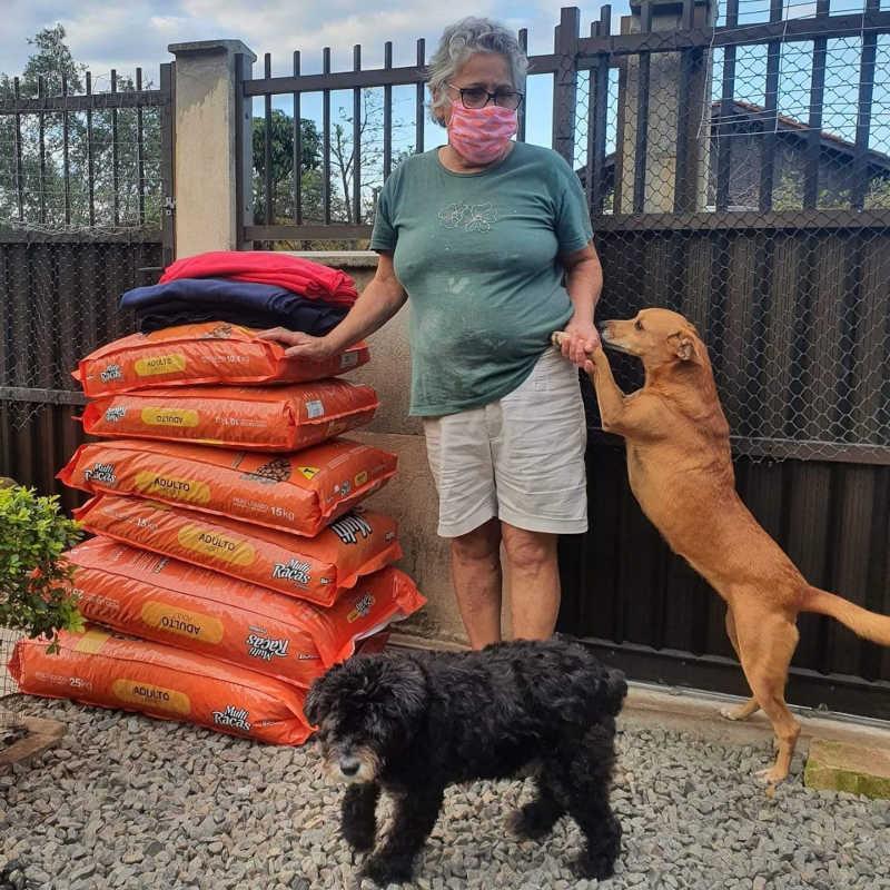 ONG arrecada cobertores para proteger animais do frio em Joinville, SC
