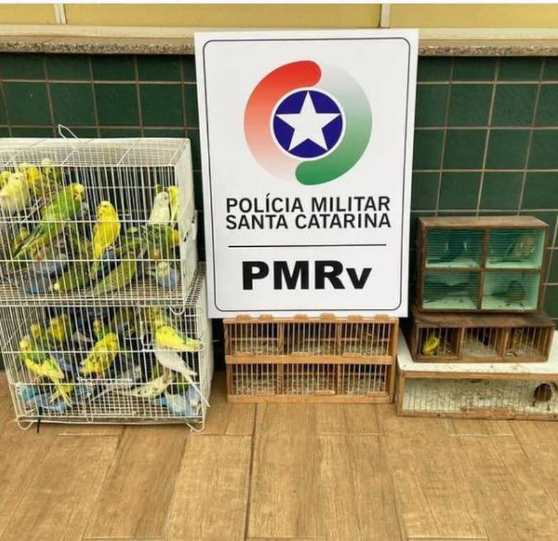 Homem é flagrado transportando mais de 90 pássaros silvestres sem autorização em SC