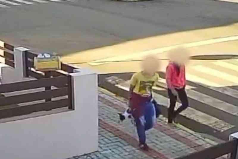 Vídeo flagra casal atirando cachorro em quintal para ser atacado por outros cães em SC
