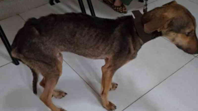 Polícia Civil prende homem em flagrante por maus-tratos a cachorro em povoado de Lagarto, SE