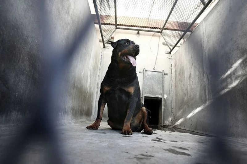 Criadora que amarrava cauda de cães para necrosar é presa em Aracaju, SE