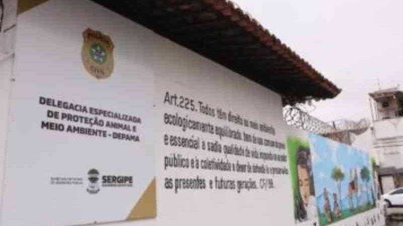 Número de denúncias chama atenção da Delegacia de Proteção Animal em Sergipe