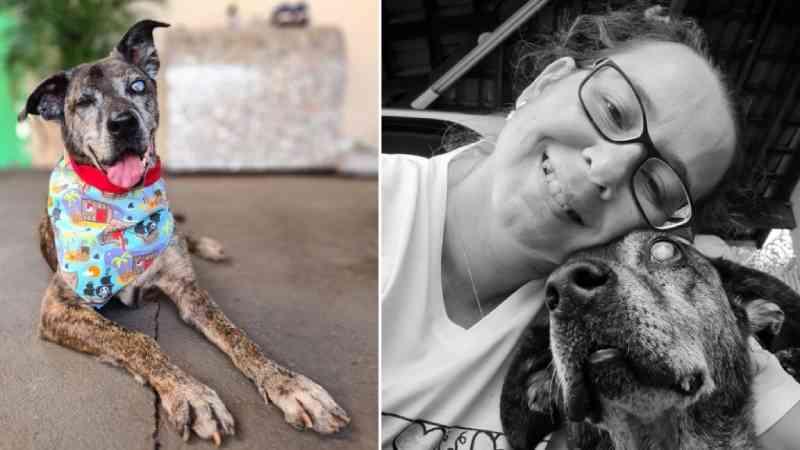 Cachorro idoso, cego e amputado que ficou dez anos no abrigo é adotado em Araraquara, SP