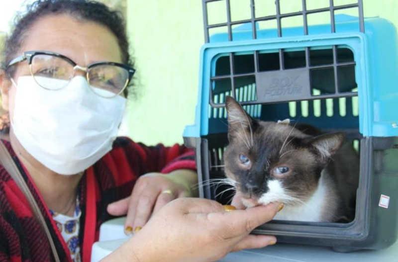 Barueri (SP) castra 144 animais em mutirão exclusivo para protetores