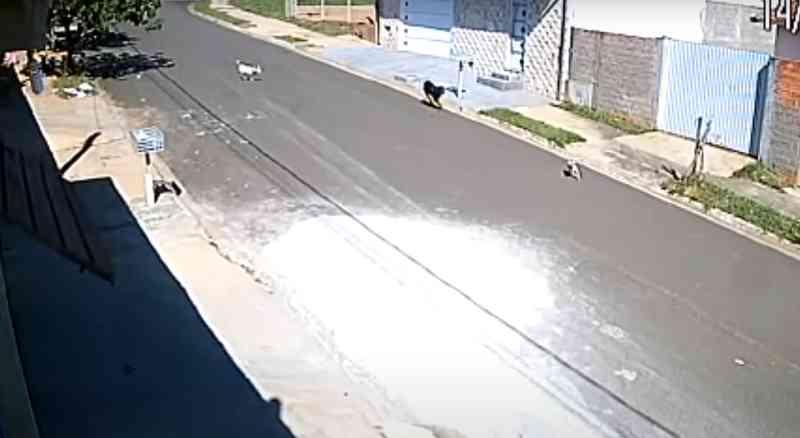 Homem mata cachorro a tiros após animal invadir sua residência em Botucatu, SP