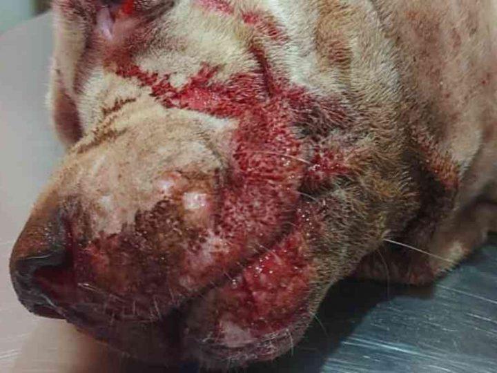 Gari é preso após espancar cachorro com pauladas em Olímpia, SP