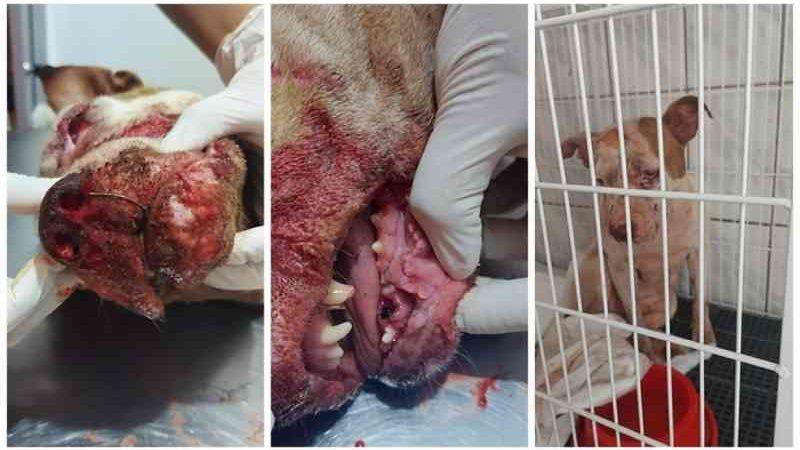 Jovem preso após agredir cachorra a pauladas é solto em audiência de custódia em Olímpia, SP