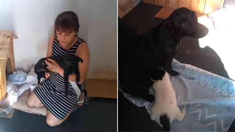 Homem é acusado de estuprar cachorra em Parisi, SP