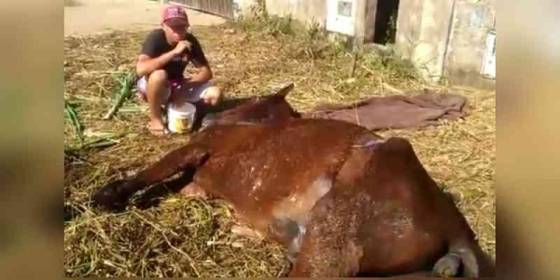 Abandonado, doente e assustado: cavalo mobiliza população em resgate emocionante, em Peruíbe, SP