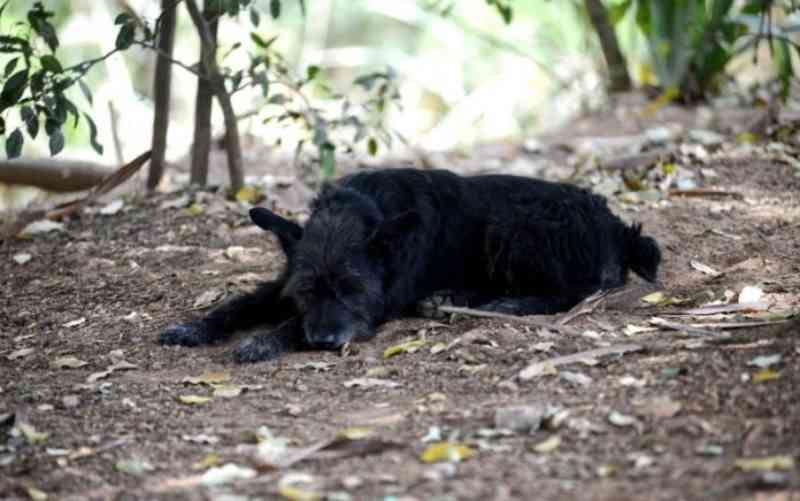 Piracicaba (SP) chega a 11 semanas sem castração de animais por falta de insumos