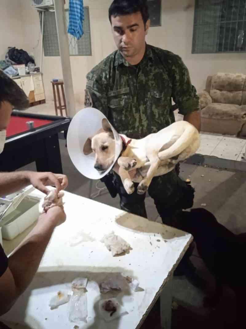 Cachorro é resgatado após passar por castração em república de estudantes universitários em Presidente Prudente, SP; VÍDEO