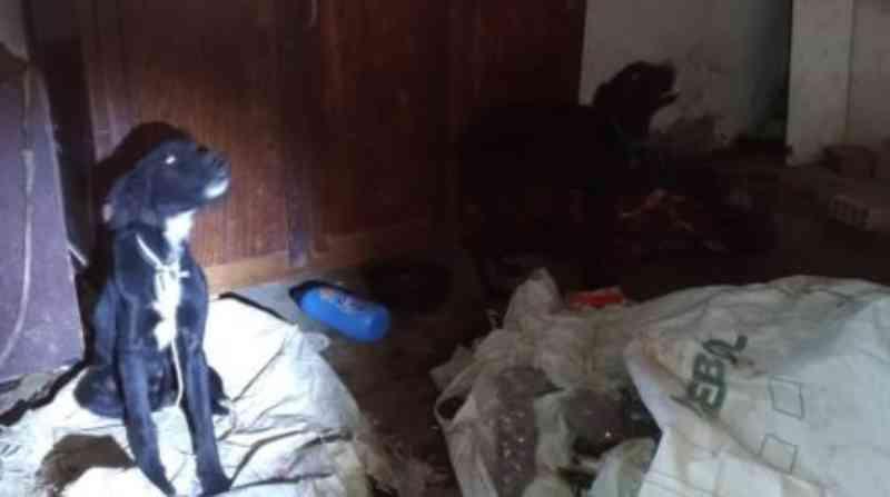 Cães vítimas de maus-tratos são resgatados pela Patrulha Animal, em Rio Claro, SP
