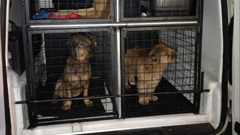 Araraquara (SP) tem a primeira prisão em flagrante por maus-tratos aos animais