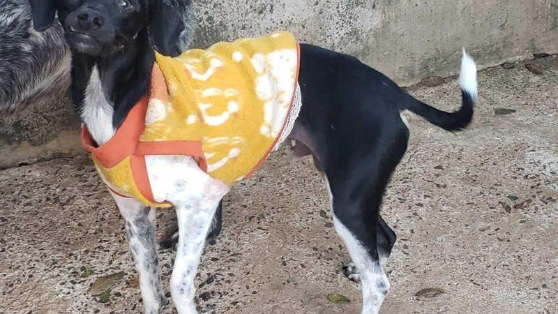"""Campanha """"Animalzinho Quentinho"""" arrecada cobertores e roupinhas em Bauru (SP) — Foto: Valeria Medina Camprigher/ Arquivo pessoal"""