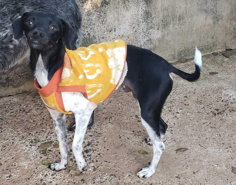 Ação 'Animalzinho quentinho' arrecada roupas para cães e gatos do CCZ de Bauru, SP