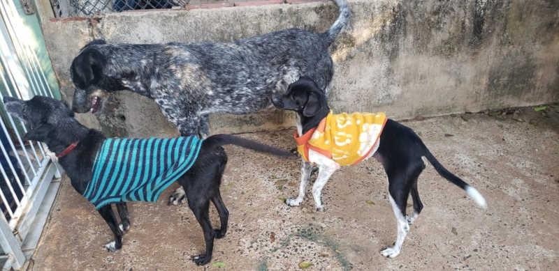 """Roupinhas para cães doadas na campanha """"Animalzinho Solidário'"""" são usadas nos animais atendidos pelo CCZ de Bauru — Foto: Valeria Medina Camprigher/ Arquivo pessoal"""