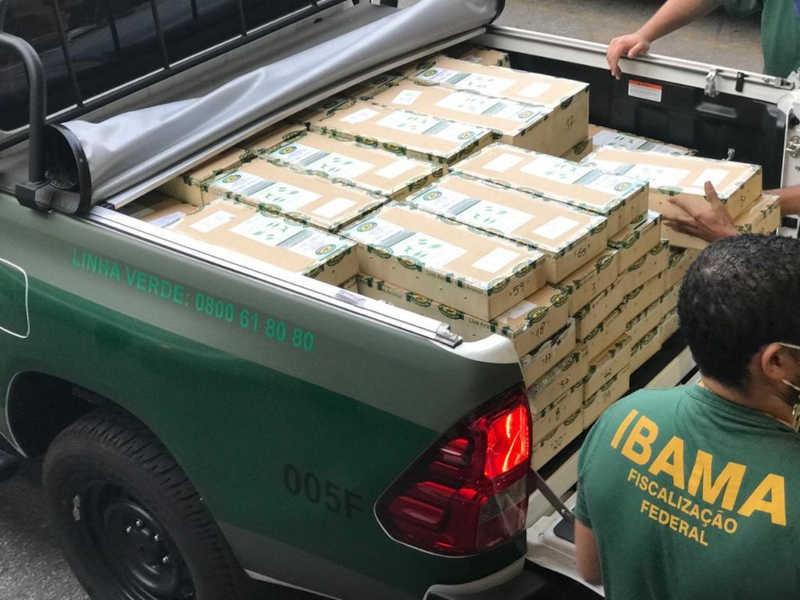 A carga de Jabutis apreendida pelo Ibama no Aeroporto de Cumbica, em Guarulhos. — Foto: Divulgação/Ibama